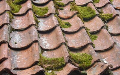 Warning Signs Your Roof Needs Replacing
